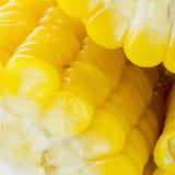 Grões do milho maduro Imagens de Stock