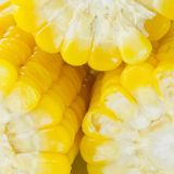 Grões do milho maduro Imagem de Stock Royalty Free