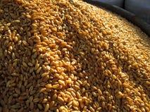 Grões do trigo em um mercado Imagem de Stock Royalty Free