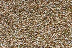 Grões do trigo mourisco Imagem de Stock Royalty Free