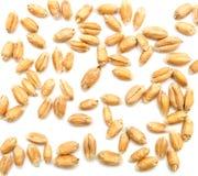 grões do trigo no branco Fotografia de Stock