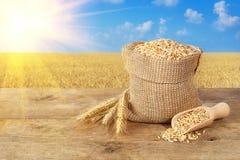 Grões do trigo no fundo do campo de trigo Imagem de Stock Royalty Free