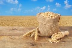 Grões do trigo no fundo do campo de trigo Imagens de Stock