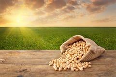 Grões dos grãos-de-bico e campo verde Imagens de Stock