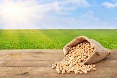 Grões dos grãos-de-bico no fundo da natureza Imagem de Stock Royalty Free