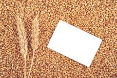Grões e orelhas do trigo como o fundo agrícola Foto de Stock
