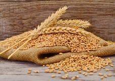 Grões maduras do trigo foto de stock