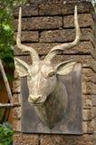 Größeres kudu Stockbild
