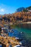 Größter See im Triglav See-Tal mit gelber Lärche Stockfoto