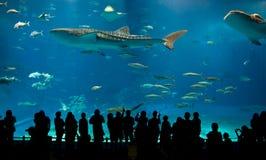 Größtes Acrylaquarium der Welt stockbild