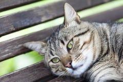 Grönögd katt Royaltyfria Bilder