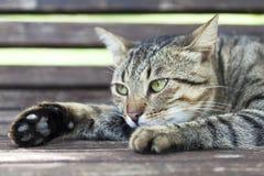 Grönögd katt Arkivfoto