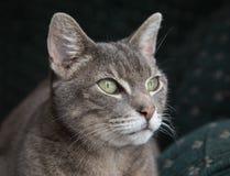 Grönögd katt Royaltyfri Bild
