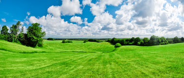 grön äng Royaltyfri Foto