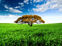 grön äng Royaltyfria Foton