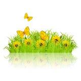 grön äng Royaltyfria Bilder