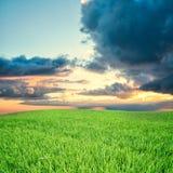 grön äng Arkivfoton