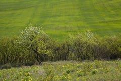 grön äng Arkivbild
