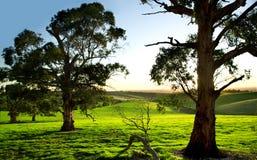 grön äng Royaltyfri Bild