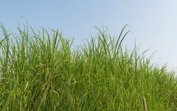 grön äng Arkivbilder