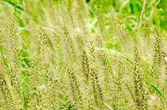 grön äng Arkivfoto