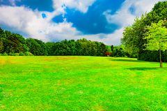 Grön äng bland träd royaltyfri bild