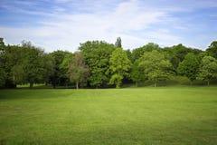 Grön äng bland träd arkivbild