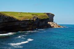 grön äng för klippor royaltyfri fotografi
