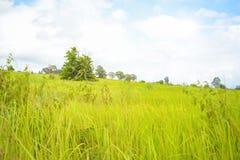 Grön äng för sommar med moln och himmelbakgrund Arkivbilder