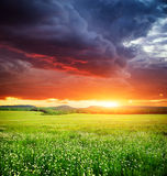 Grön äng i berg. Royaltyfri Foto