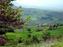 Grön äng i centrala Grekland Arkivbild
