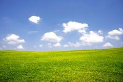 Grön äng med blå himmel Arkivfoto