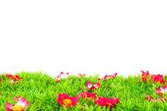 Grön äng med blommor Royaltyfria Bilder