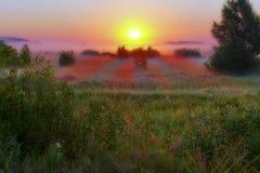 Grön äng med en dimma som lite varstans packas in, och solljus som bryter den utåt bilden som från en saga Arkivbilder