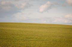 Grön äng med himmel Arkivfoto