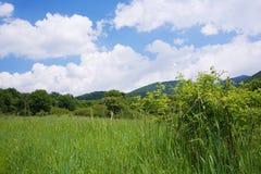 Grön äng med vildblommor och blå himmel Arkivbilder