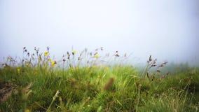 Grön äng med vildblommor på ett berg i dimman lager videofilmer