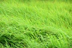 Grön äng med vindslag beautifully arkivfoton