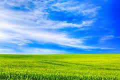 Grön äng och fantastisk himmel royaltyfri foto