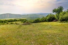 Grön äng på bakgrunden med avlägsna berg Öppna fältet med grönt gräs royaltyfri bild