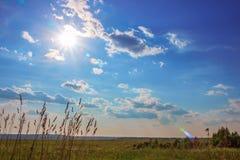 Grön äng under blå himmel med moln Arkivbilder