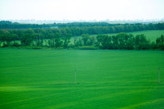 Grön äng under blå himmel med moln Royaltyfria Bilder