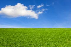 Grön äng under den blåa himlen arkivfoto