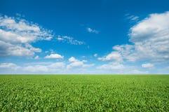 Grön äng under en blå himmel Arkivfoto