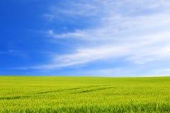 Grön äng under klar himmel arkivfoto