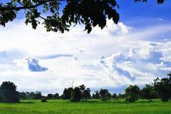 Grön äng, vita moln, blå himmel som är härlig Arkivbilder