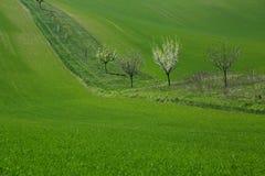 grön ängfjäder Royaltyfri Bild