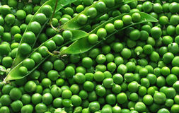 grön ärta Royaltyfri Fotografi