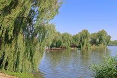 Grön ö i mitt av sjön Arkivbilder