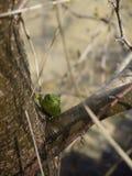 Grön ödla Royaltyfria Foton